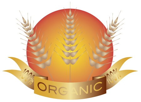 Wheat Grain Stalk with Banner and Sun Background Illustration