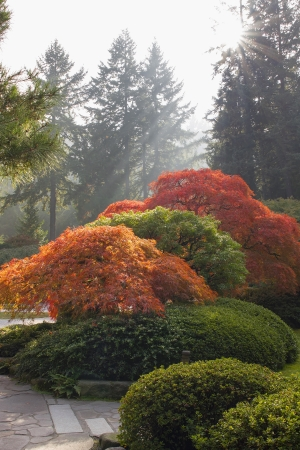 hardscape: Japanese Garden with Lace Leaf Maple Trees and Shrubs Bathed in Sunlight in Fall Season Stock Photo