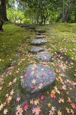 Fallen Japanese Maple Tree Leaves on Stone Steps and Moss in Autumn Stock Photo - 15140583