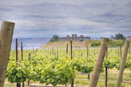 washington landscape: Winery Vineyard in Maryhill Stonehenge Washington State Along Columbia River Gorge