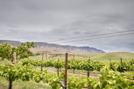 washington state: Winery Vineyard Landscape with Wine Turbine Farm on Rolling Hills Stock Photo