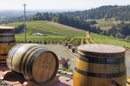 Wine Barrels with Winery Vineyard in Background Stock Photo