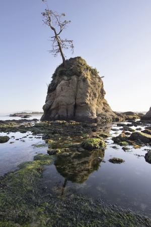 inlet bay: Pig and Sows Inlet Rock in Garibaldi Oregon Coast Tillamook Bay at Low Tide