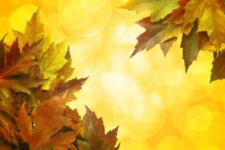 Fall Color Maple Tree Leaves on Blurred Sunlight Background Border photo