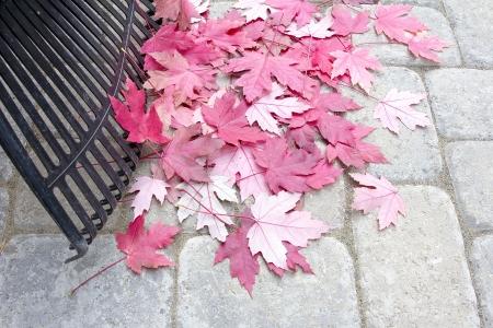 adoquines: Rastrillar Fallen Red Maple Tree Leaves de piedra del patio trasero Patio Pavers en oto�o Foto de archivo
