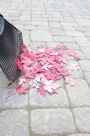 pavers: Raking Fallen Red Maple Tree Leaves from Backyard Stone Pavers Patio in Autumn Vertical