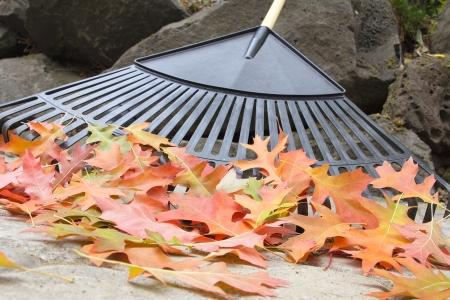 adoquines: Rastrillar �rbol ca�do las hojas del roble de piedra del patio trasero Patio Pavers en oto�o Primer