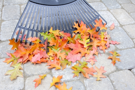 adoquines: Rastrillar �rbol ca�do las hojas del roble de piedra del patio trasero Patio Pavers en oto�o Foto de archivo