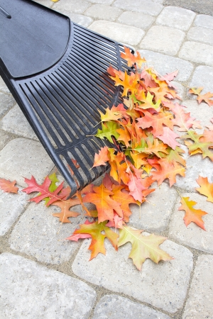 adoquines: Rastrillar las hojas del roble �rbol ca�do desde Backyard Patio Pavers Stone en oto�o Vertical Foto de archivo