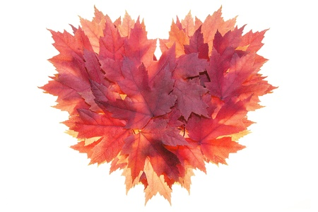 Fall Season Red Maple Tree Leaves Forming Heart Shape Isolated on White Background Stock Photo - 15769460