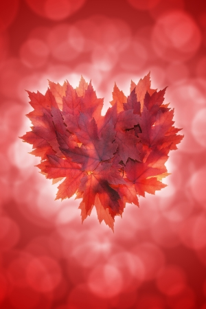 Heart Shape with Fall Red Maple Tree Leaves on Blurred Defocused Background photo