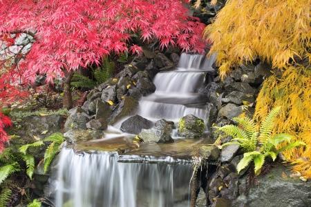 Cascade de jardin avec des arbres d'érable japonais dans la saison d'automne