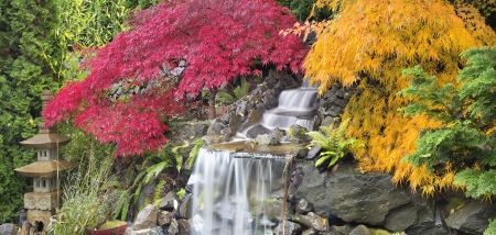 Backyard Waterfall with Japanese Maple Trees in Fall Panorama