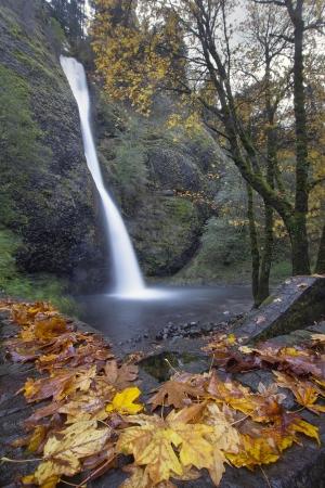 horsetail: Horsetail Falls Along Columbia River Gorge Oregon in Fall Season