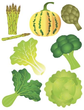 야채 호박 스쿼시 멜론, 아스파라거스 아티 초크, 브로콜리 상추 잎이 많은 녹색 케일 시금치 양배추 일러스트 일러스트