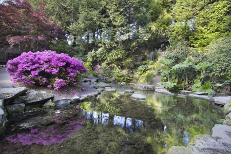 Waterfall and Pond at Crystal Springs Rhododendron Garden in Spring Stock Photo - 19380898