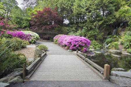 bloodgood: Foot Bridge across Waterfall Pond at Crystal Springs Rhododendron Garden in Spring Season Stock Photo