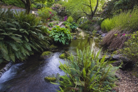 Stream Flowing Under the Wooden Bridge Arches with Ferns Hostas and Bog Plants at Crystal Springs Rhododendron Garden photo