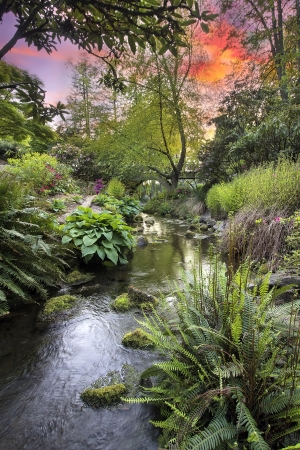 Stream Flowing Under the Wooden Bridge Arches with Ferns Hostas and Bog Plants at Crystal Springs Rhododendron Garden at Sunset Stock Photo - 19508270