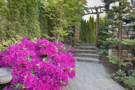 coral bark: Pink Azaleas Blooming in Spring Along Garden Brick Paver Path with Wood Arbor Stock Photo