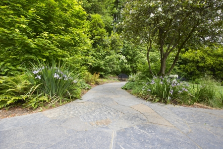 Slate Stone Garden Path Walkway with Oregon Irises Trees and Shrubs Stock Photo - 19707409