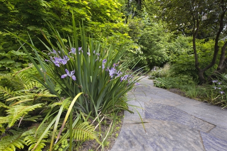 Slate Stone Garden Path with Oregon Irises Blooming in Spring Stock Photo - 19707392