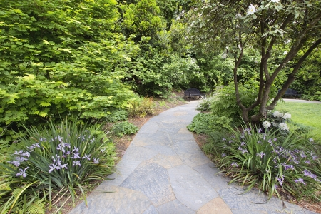 garden path: Slate Garden Path Walkway with Flowering Oregon Irises and Trees in Springtime