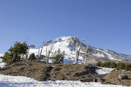 mt hood: Mount Hood with Clear Blue Sky in Oregon