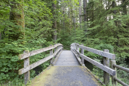 Wooden Foot Bridge Along Hiking Trail in Silver Falls State Park Oregon photo