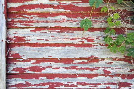 house siding: Old Red Barn with Peeling Paint on Wood Siding and Climbing Vines Grunge Background
