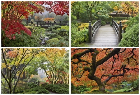 azaleas: Japanese Garden in the Fall Season with Maple Trees and Wooden Foot Bridge over Creek Collage
