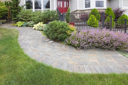 mugo: Front Yard Garden Curve Brick Paver Path with Green Grass Lawn Flowering Plants Trees and Shrubs