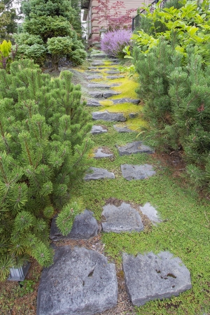 mugo: Natural Stone Steps with Green Moss and Creeping Thyme Ground Cover Going Up to Frontyard Garden Stock Photo