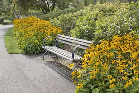 Park Bench Along Garden Path with Black-Eyed Susan Flowers and Bushes Blooming in Summer Stock Photo - 22119567