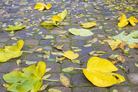 hardscape: Backyard Stone Paver Patio with Fig and Walnut Tree Fall Leaves Background Stock Photo