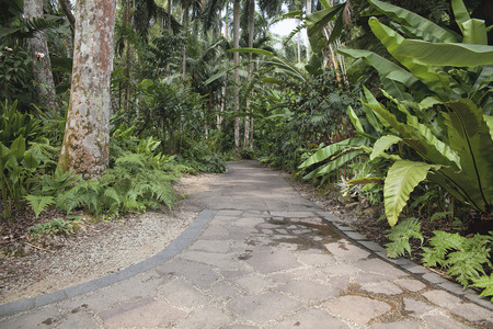 Garden Path with Tropical Plants and Trees photo