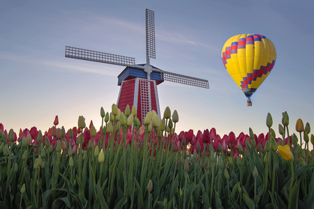 Hot Air Balloon Over Tulip Field with Windmill in Woodburn Oregon photo