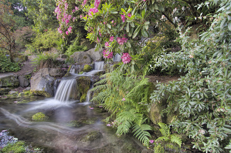 water feature: Garden Waterfall with Blooming Rhododendron Pink Flowers and Ferns in Spring