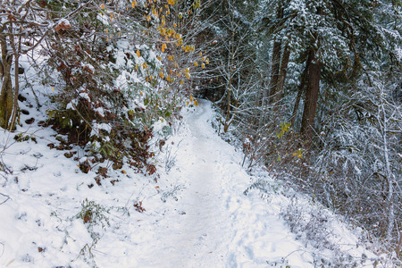 oregon  snow: Snow Covered Forest Hiking Trail at Columbia River Gorge in Winter Season Stock Photo
