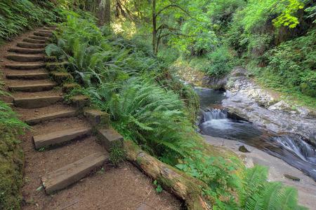 Houten traptreden in Sweet Creek Falls Trail Complex met weelderig groen in Mapleton Oregon in het voorjaar seizoen