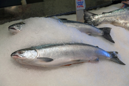 Troll Caught Whole Fresh Sockeye Salmon Fish on Ice for Sale in Market