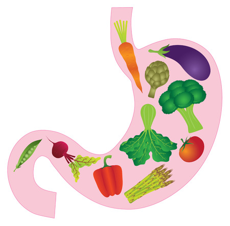 Human Stomach Anatomy with Carrot Eggplant Beet Bell Peppers Asparagus Artichoke Peas Tomato Green Vegetables Color Illustration