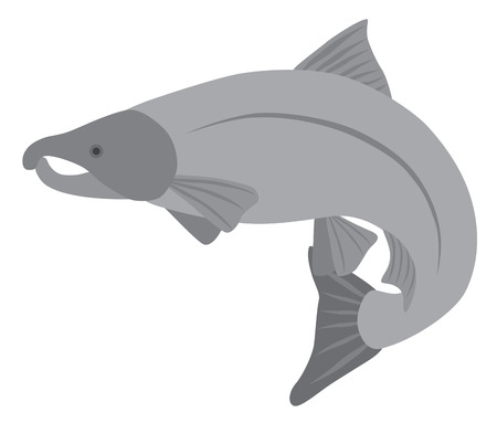 Coho Salmon Fish in Grayscale Illustration Illustration