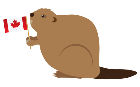 canadian flag: The Canadian Beaver Holding Canada Flag Color Illustration