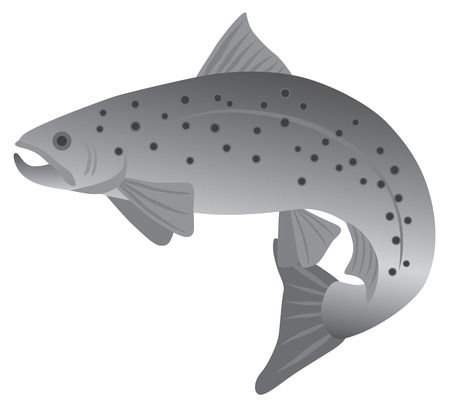 fresh fish: Brook Trout Fish in Grayscale Illustration Illustration