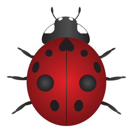 ladybug cartoon: Red Nine Spotted Ladybug Isolated on White Background Color Illustration Illustration