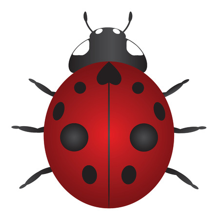 coccinellidae: Red Nine Spotted Ladybug Isolated on White Background Color Illustration Illustration