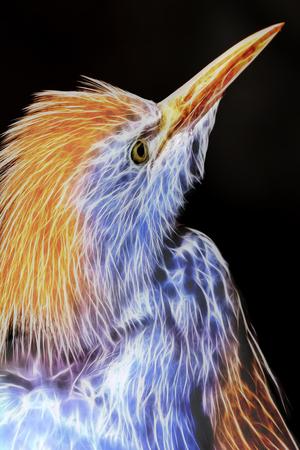 egret: Cattle Egret Wild Bird Neon Effect Abstract Closeup Portrait