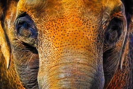 asian elephant: Asian Elephant Closeup Face Portrait Abstract Neon Background