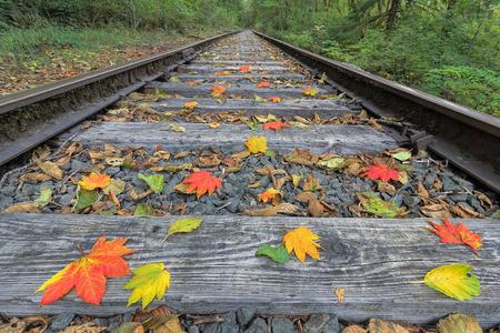 ferrocarril: Vía de tren con color las hojas caen en otoño Foto de archivo